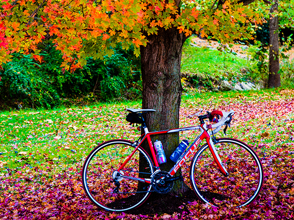 Bike in fall